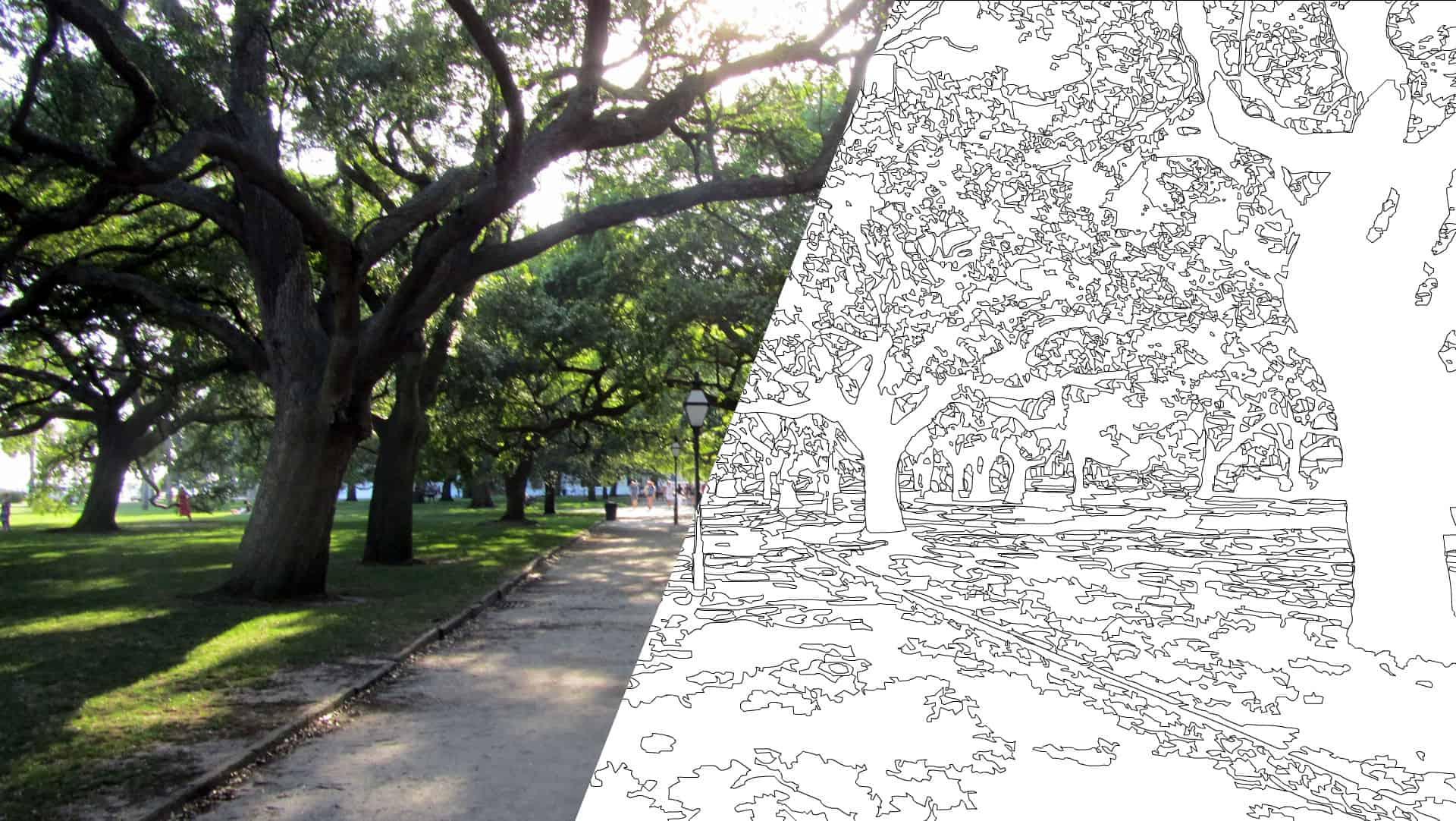 Fotomontage eines Waldfotos mit dazugehöriger Malvorlage